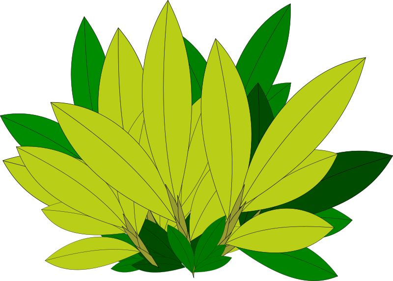 Clipart Tree Leaf Foliage Leaves Pencil And In Color - Tree (1048x750)