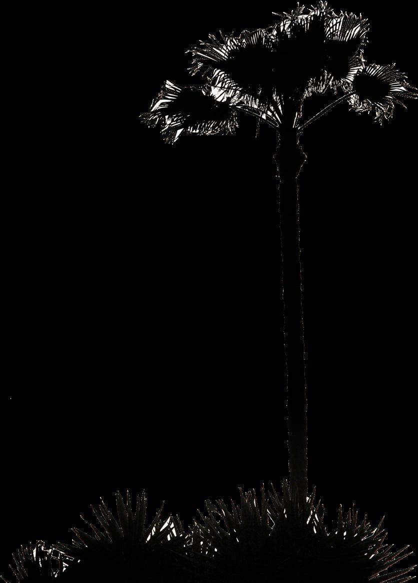 Clip Art Inspiration Palm Tree Silhouette Clip Art - Palm Tree Silhouette .png (900x1200)