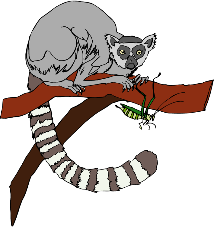 Lemur Clip Art - Clip Art Lemur (709x750)