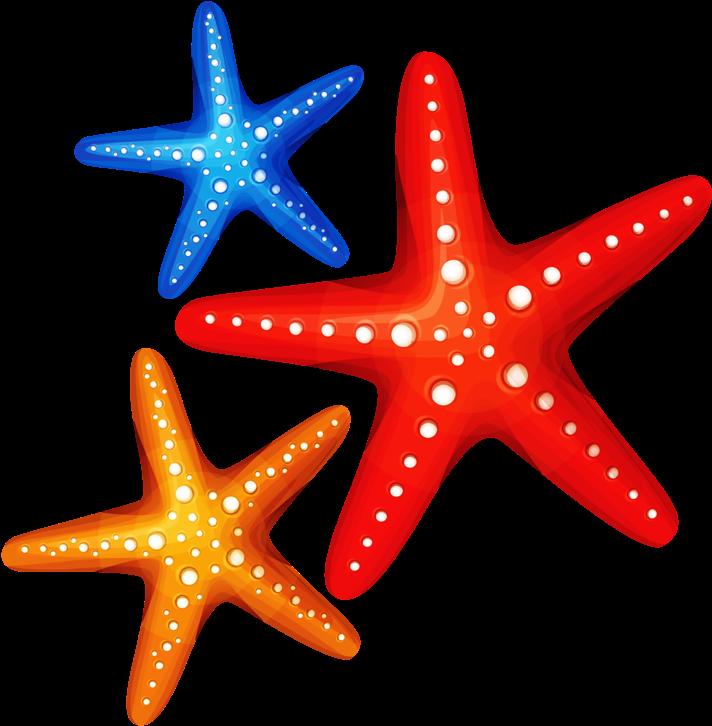 Морские звезды картинка для детей