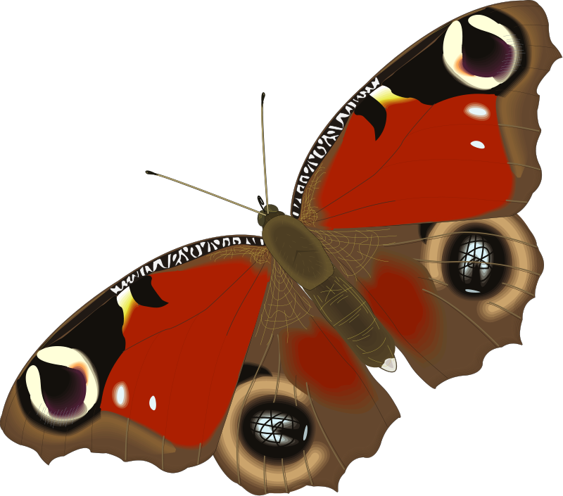 Картинки для детей бабочка анимация