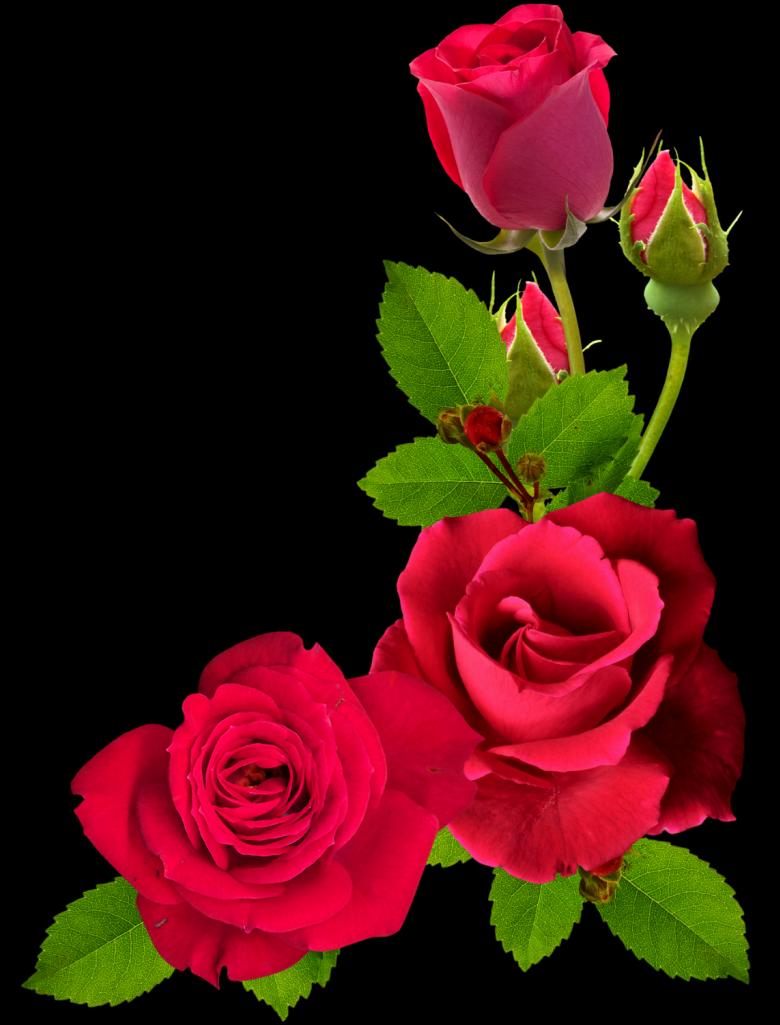 Американские открытки, розы открытка пнг