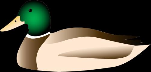 Duck Clipart High Resolution - Mallard Clipart (502x241)