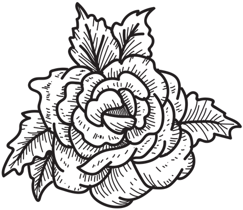 Blooming Rose Head Sketch Icon Flower Flower Drawing Transparent Background 512x512 Png Clipart Download