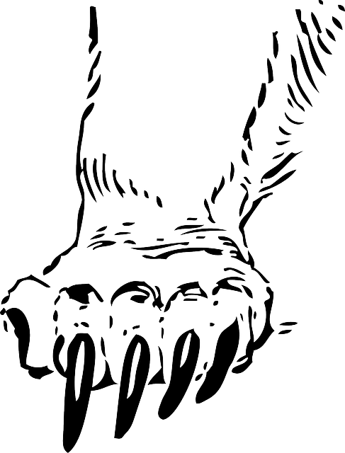 Cartoon Cat Outline Hand Drawing Sketch Print Custom Grizzly Bear Paw Sticker 487x640 Png Clipart Download