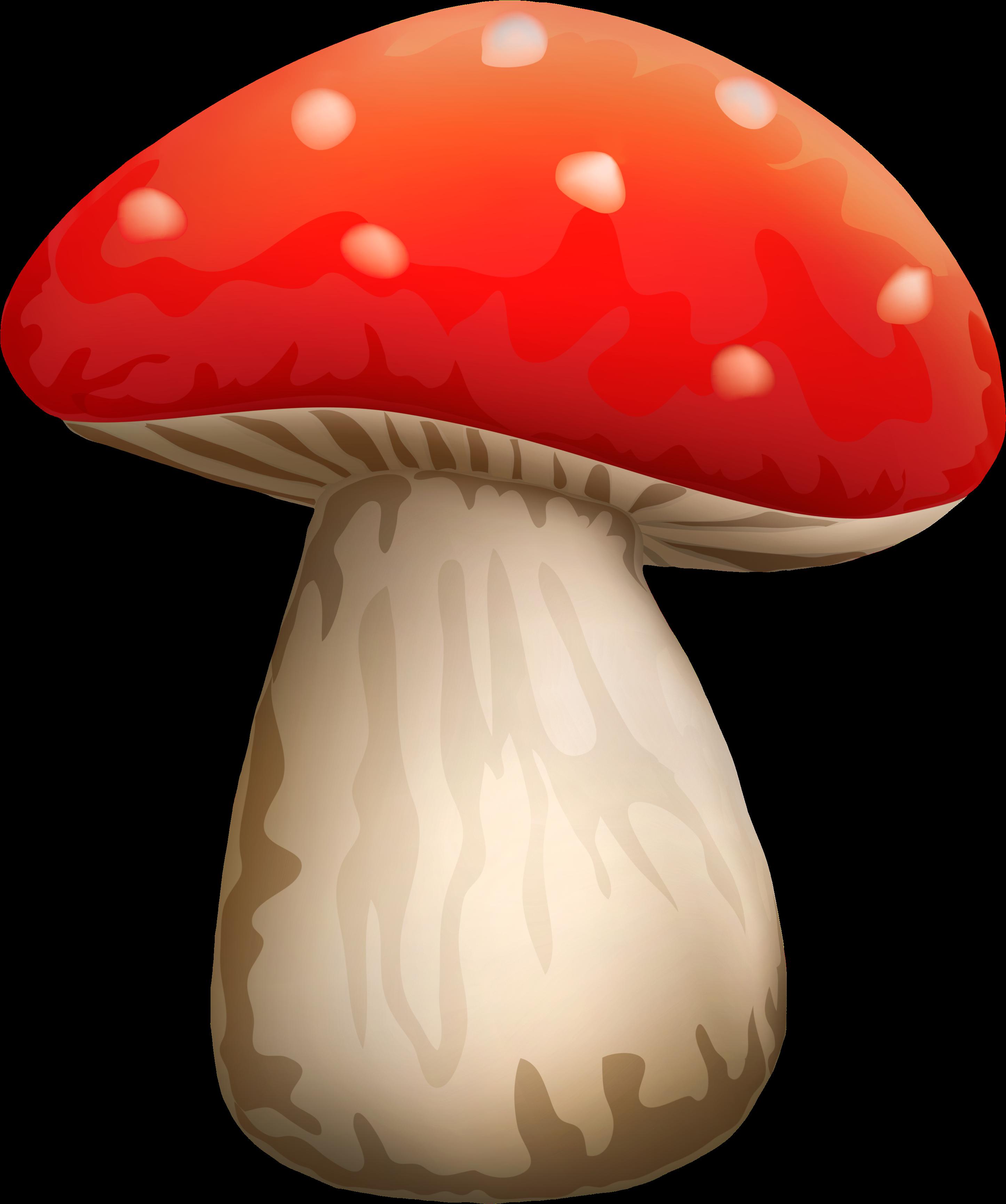 верхней картинка гриба боровика для презентации любой человек