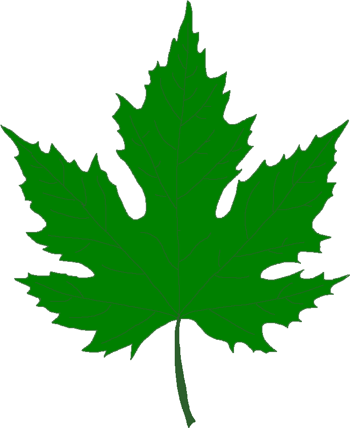 Pin Leaf Clipart Sycamore Tree - Silver Maple Leaf Clip Art (737x885)