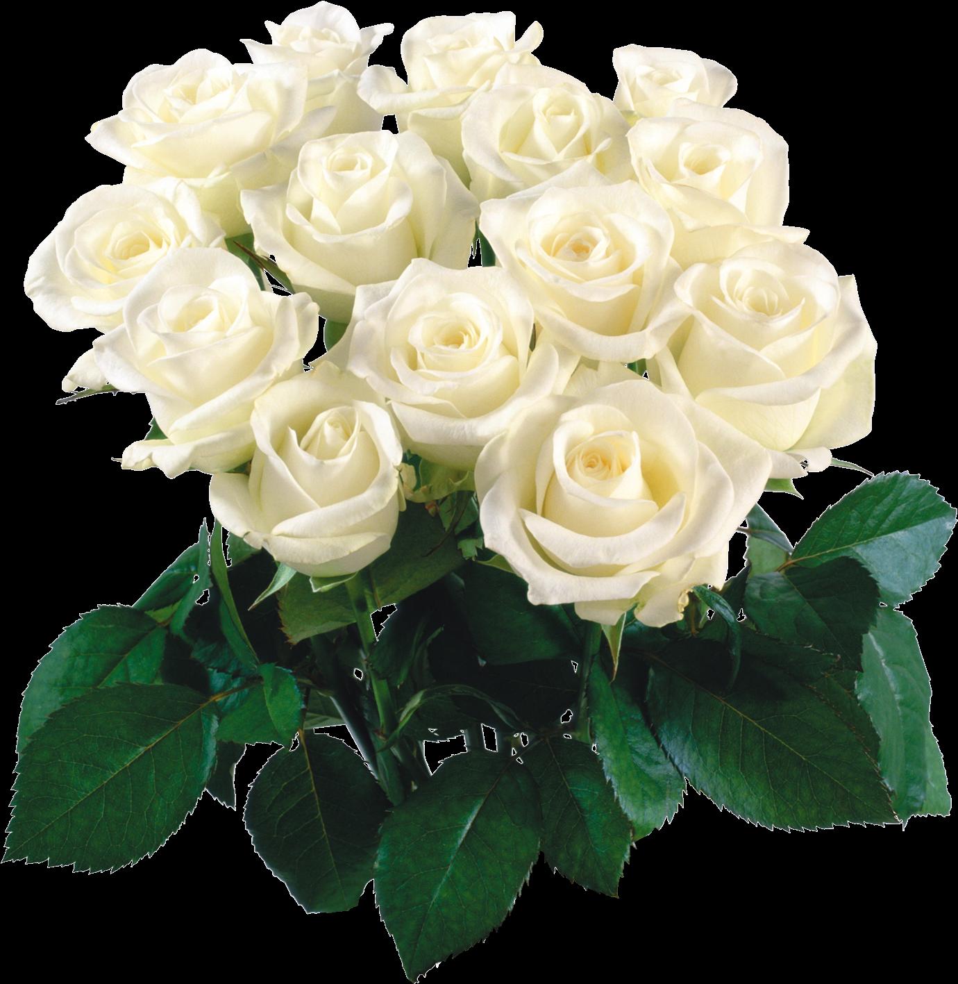 Открытка белые розы с днем рождения женщине, открытки февраля