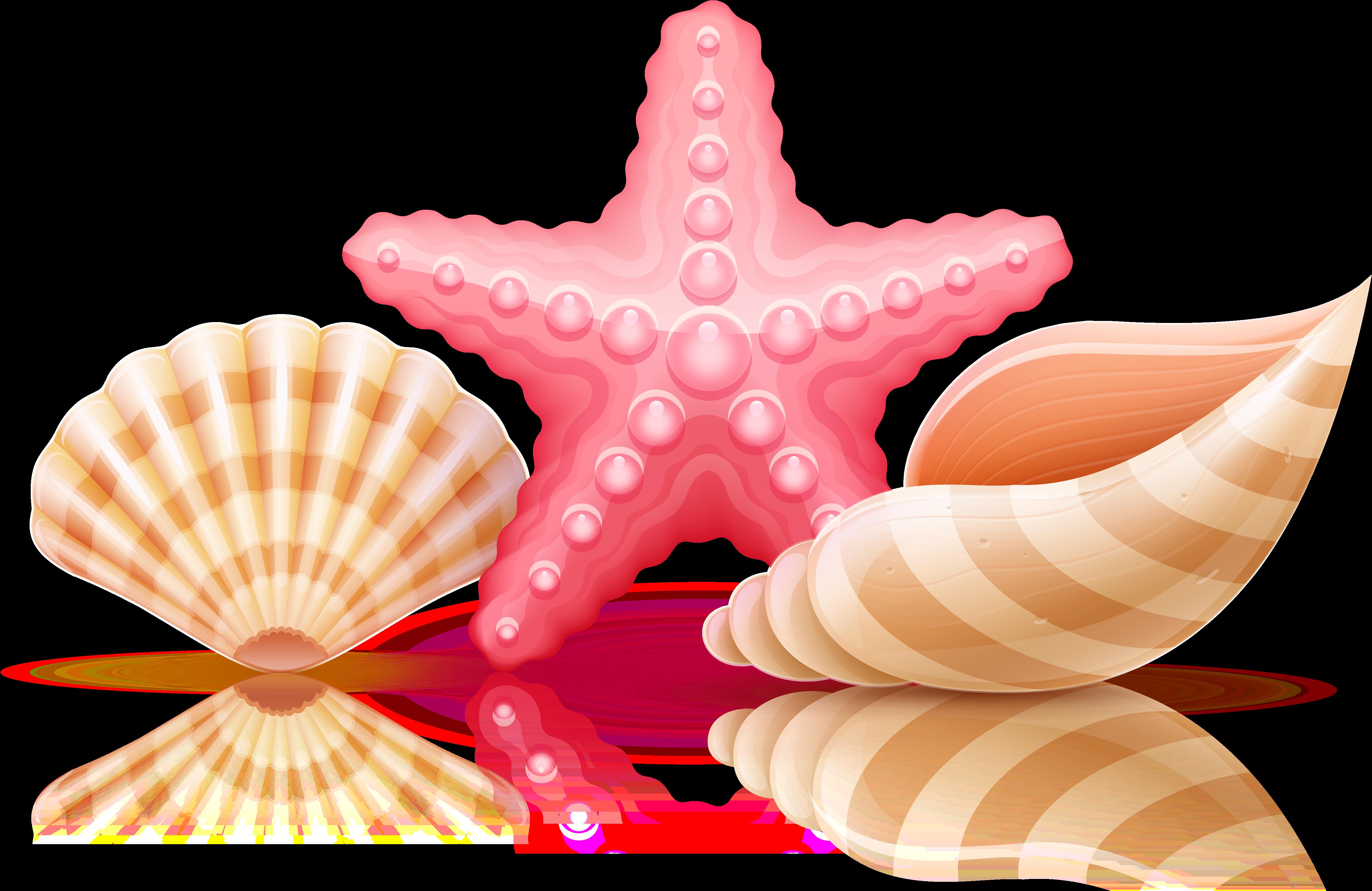 Ракушки звездочки морские мультяшные картинки