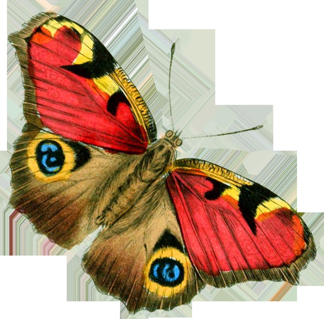 Картинки с изображением бабочек для детей, открытка лет