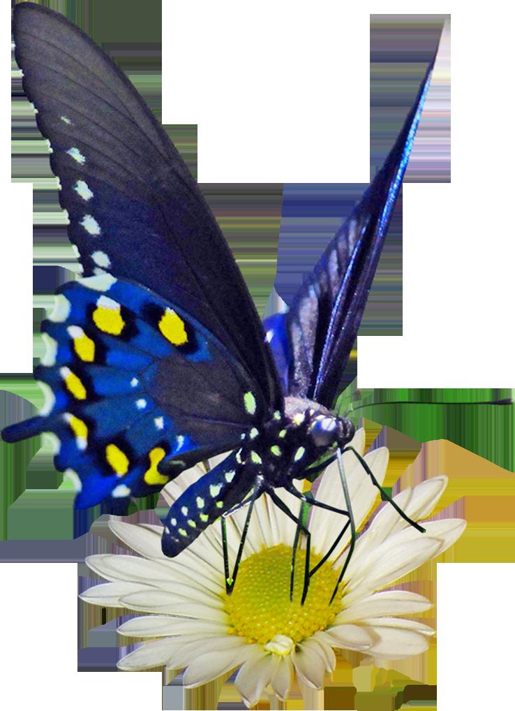 Анимированные картинки бабочки