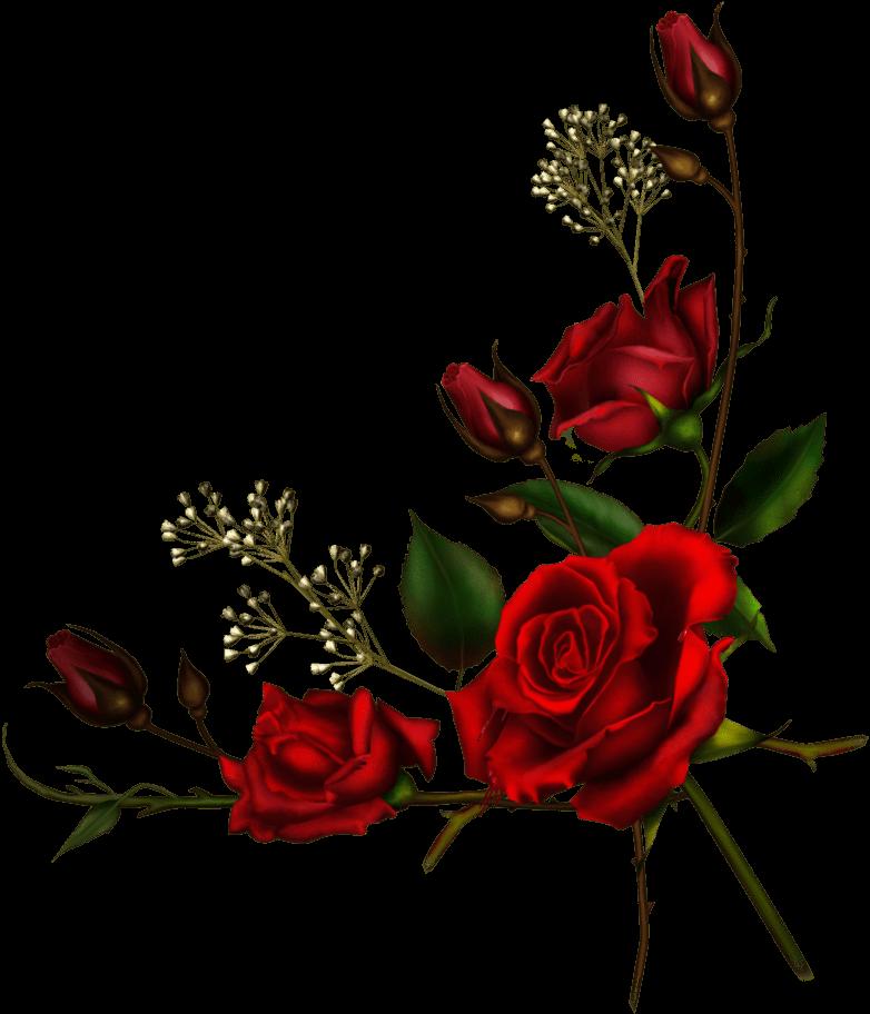 Узор розы для открытки, открытки приятного вечера
