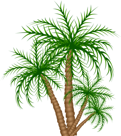 Congo Playfield Palm Trees - Roystonea (530x600)