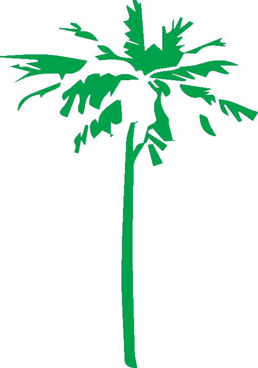 صورة نخله خضراء - Clip Art (512x730)