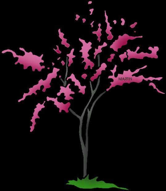 State Tree Of Oklahoma - Oklahoma State Tree Png (569x648)
