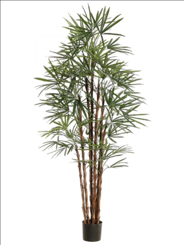 "6"" Honey Rhapis Palm Tree X10 In Plastic Pot Green - Silk Plants Direct Rhapis Palm Tree - Green - Pack (800x800)"