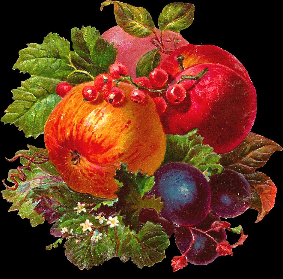 Винтажные картинки фрукты и овощи для