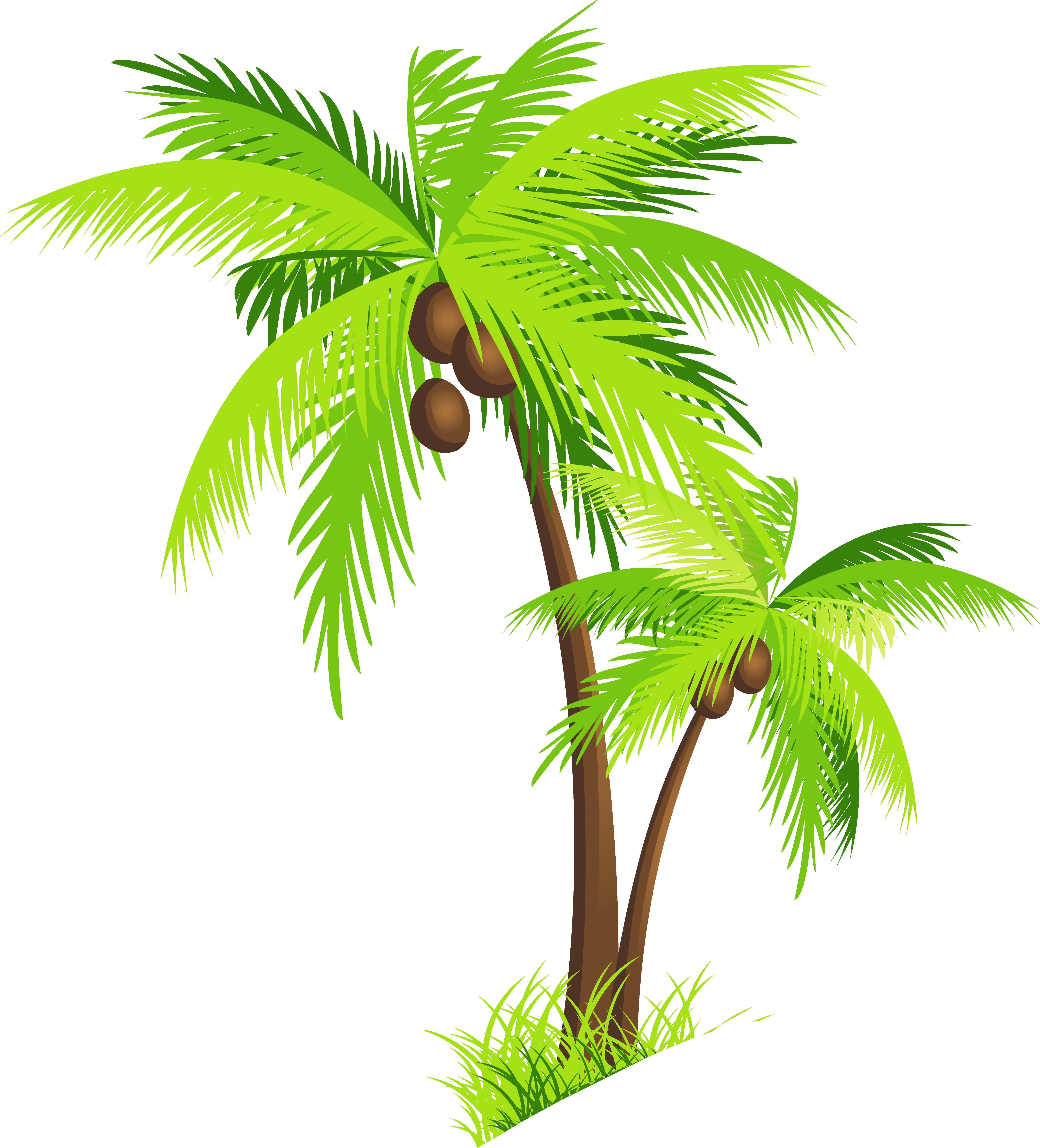 картинки пальма пнг столетии селекционеры