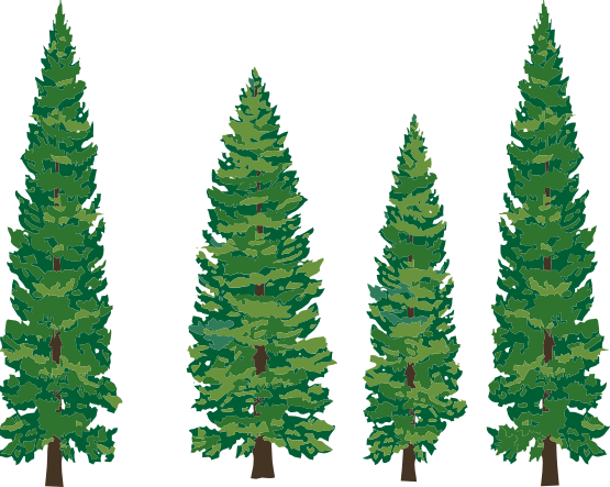 Clipart Info - Pine Tree Clipart Png (555x443)