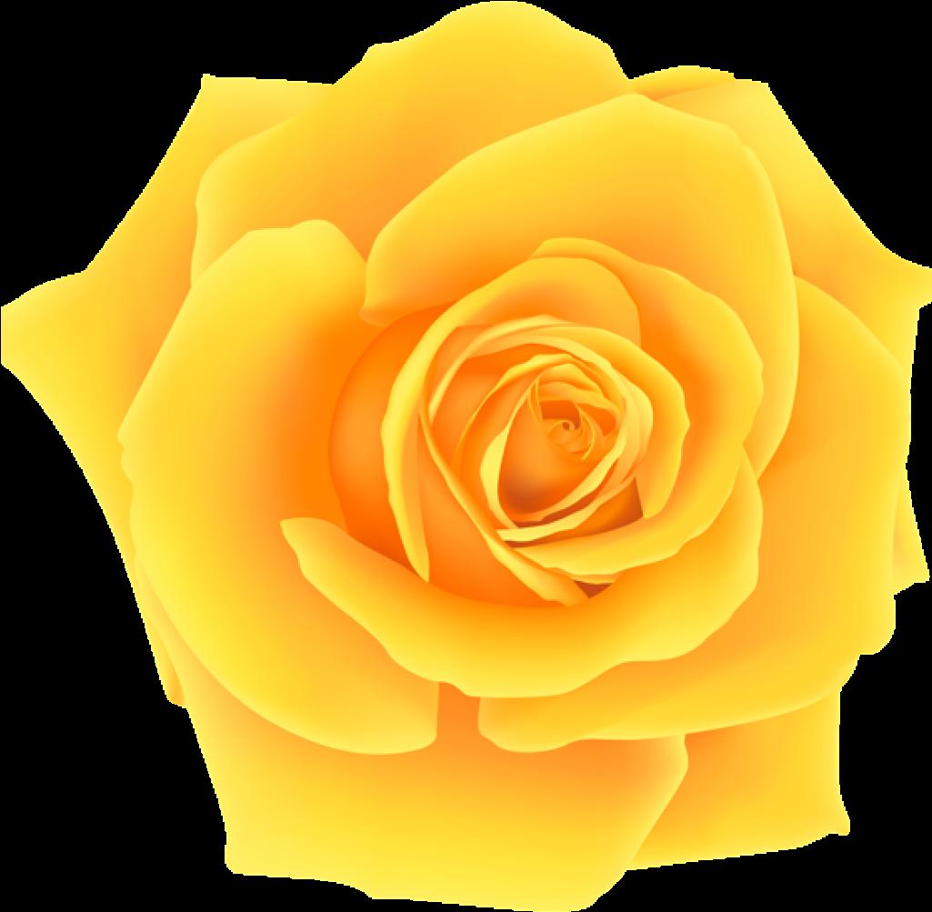 Картинки желтых роз на прозрачном фоне для фотошопа, новорожденными