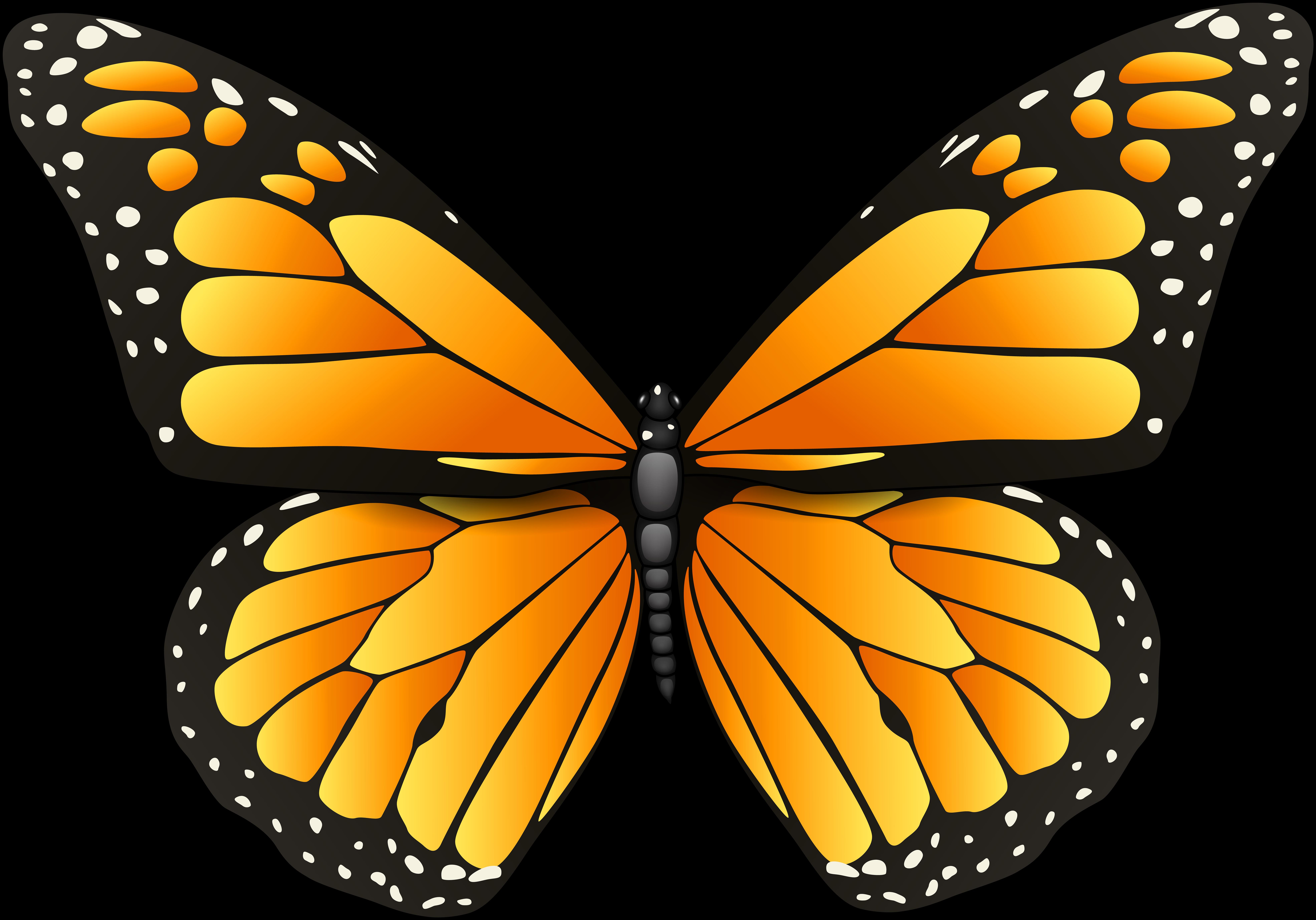 Картинка на белом фоне бабочка для детей