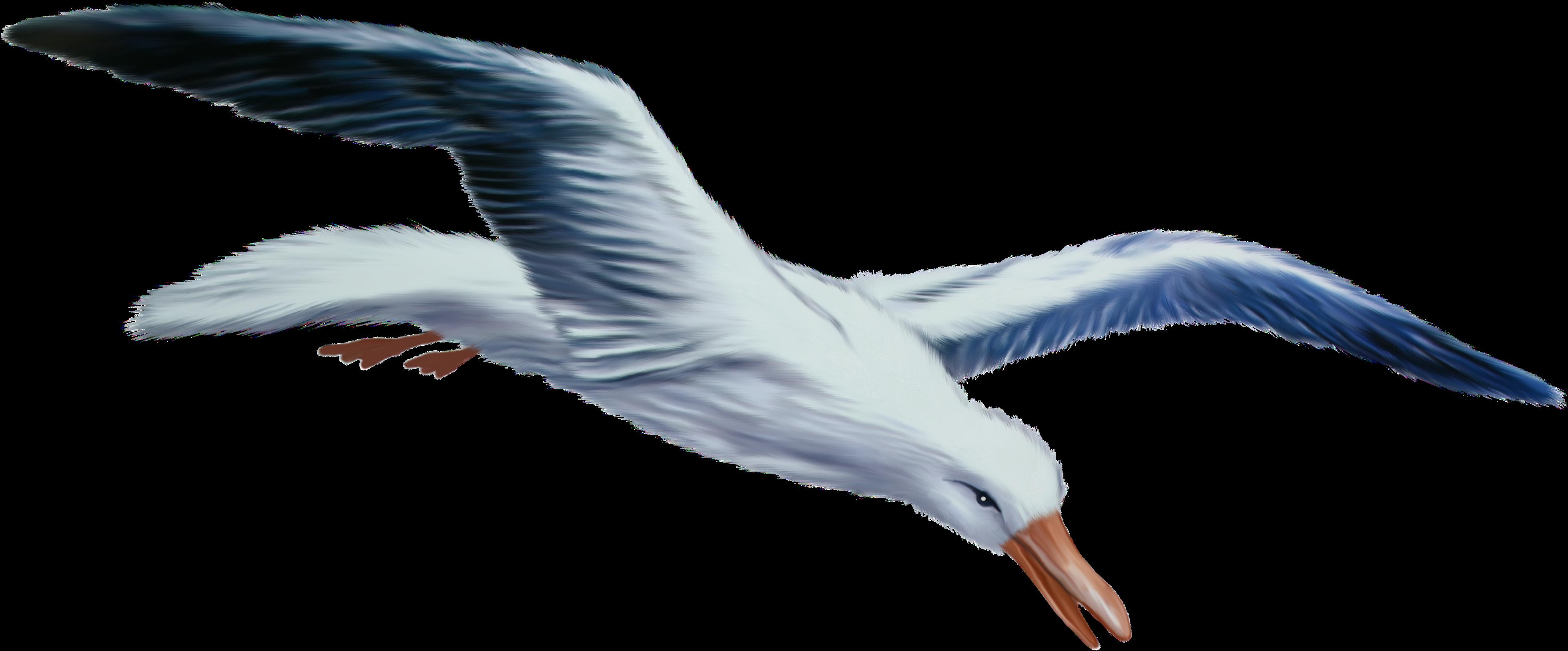 Марта, картинки чайки на прозрачном фоне