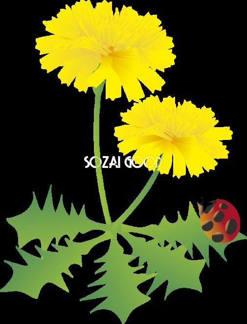 たんぽぽの花とてんとう虫の無料イラスト 春3 5月 春の 花 イラスト 無料 505x660 Png Clipart Download