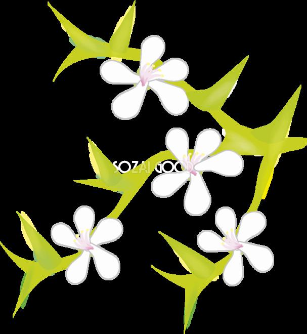 枸橘 花の無料イラスト 春 4月 Illustration 607x660 Png Clipart Download