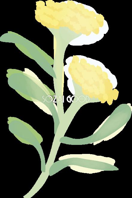 母子草 花の無料イラスト 春 4月 5月 Arum 441x660 Png Clipart Download