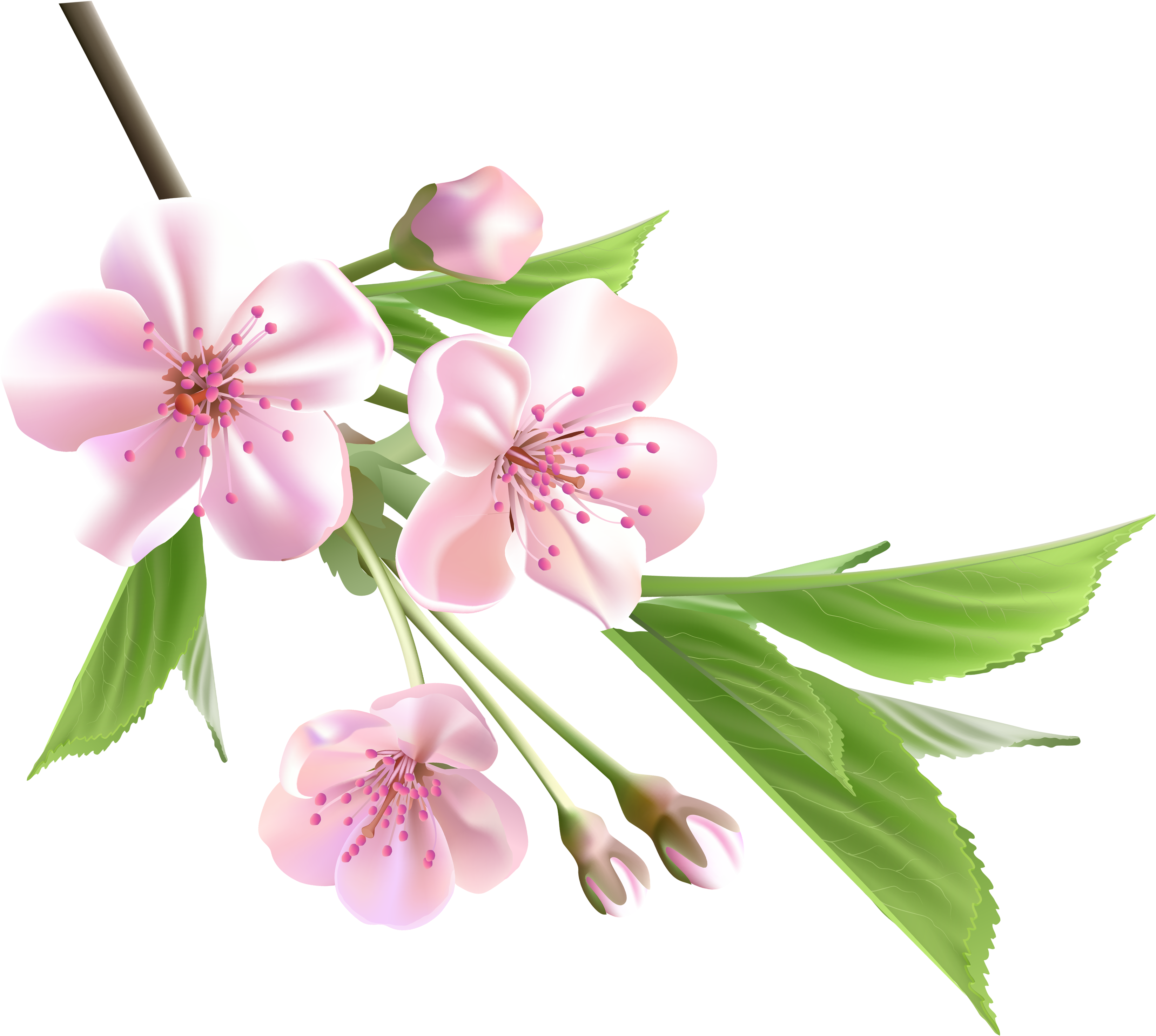 Приколом, гугл картинки цветы пнг