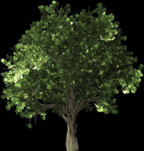 Zelkova Serrata, Tree, Bonsai, Zelkova, Serrata - Apple Tree Without Fruit (640x640)
