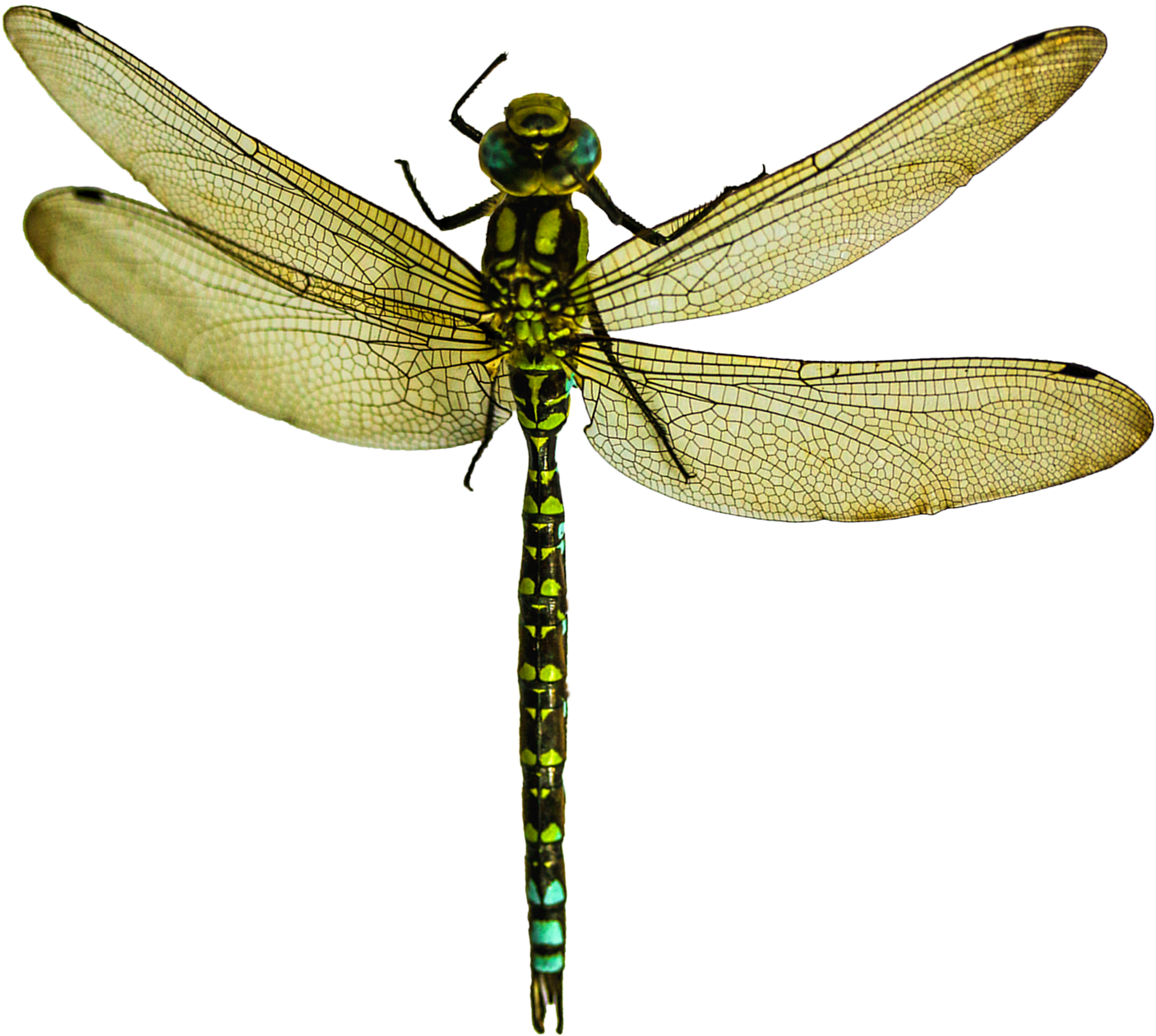 Dragonfly Png - Dragonfly Png (1583x1440)