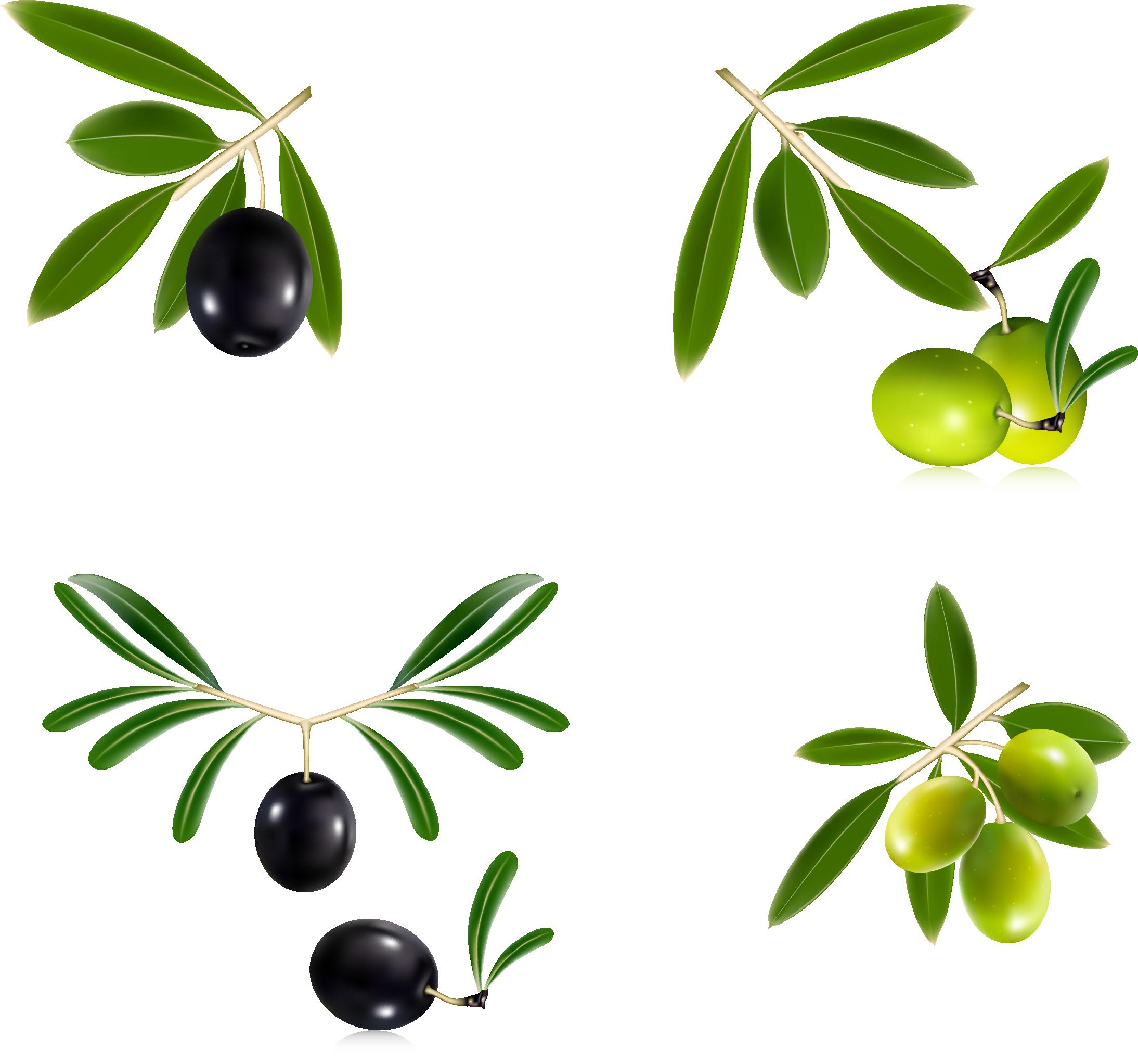 грейдера картинки маслины без фона производители спорт товаров