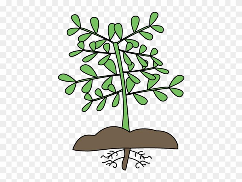 Mockingbird Nursery Site Icon - Plants Clipart #881