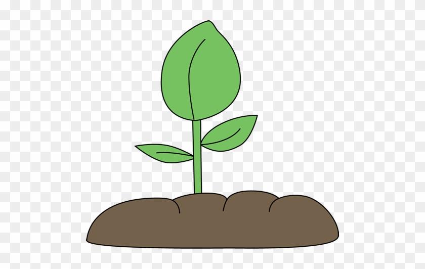 Plant - Plant Clip Art #919