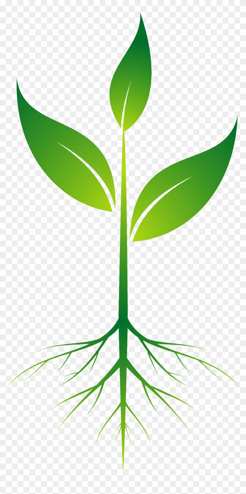 Root Plant Clip Art - Root Plant Png #1059