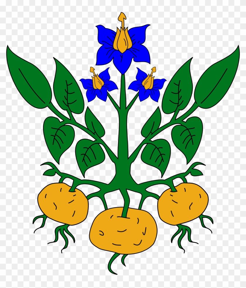 Clipart Parts Of A Plant Clipart Plant Part Clipart - Potato Plant Clipart #1080