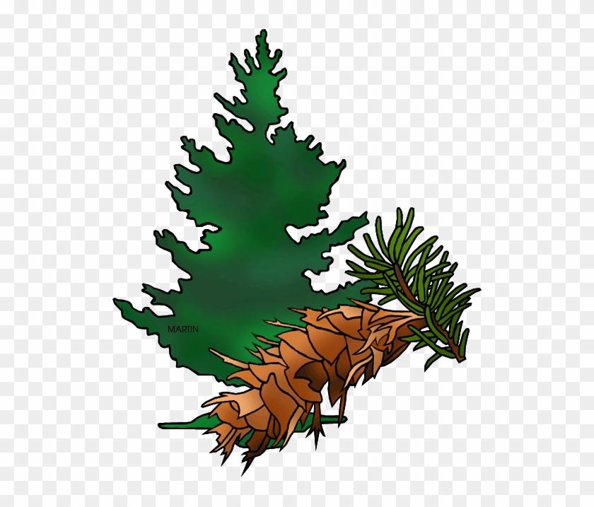 Fir Tree Clipart Douglas Fir - State Tree Of Oregon #1243