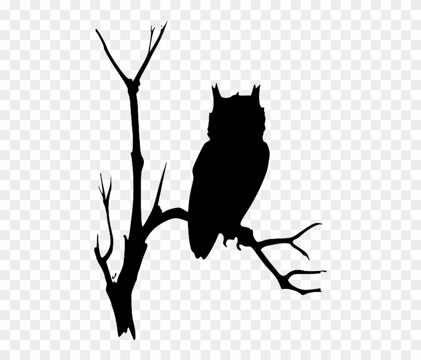 Free Image On Pixabay - Owl On Branch Silhouette #1286