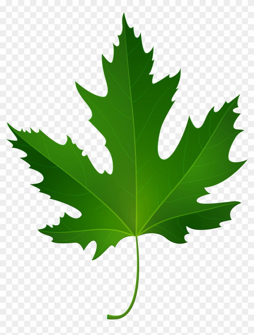 Maple Leaf Png Clip Art - Maple Leaf Png Clip Art #1305