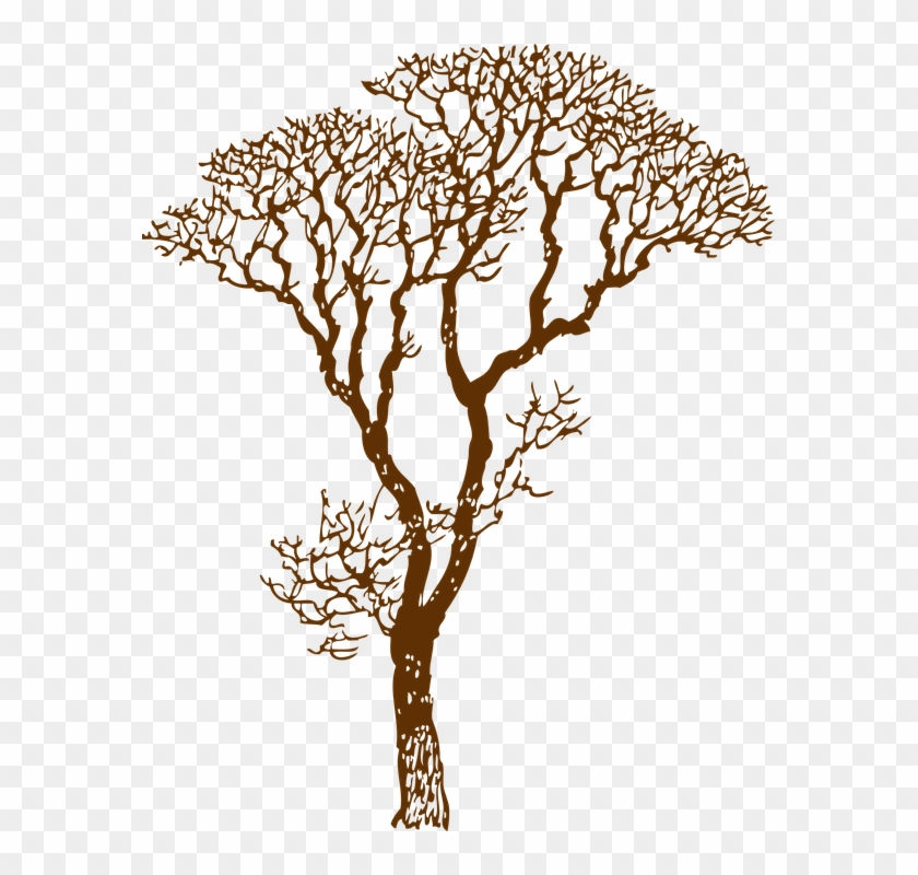 Tree Bare Ecology Environment Nature Forest - Tree Bare Ecology Environment Nature Forest #154