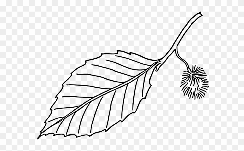 Free Vector Beech Leaf Outline Clip Art - Free Vector Beech Leaf Outline Clip Art #1559