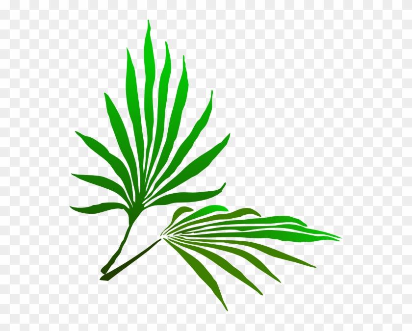 Fresh Palm Tree - Fresh Palm Tree #164