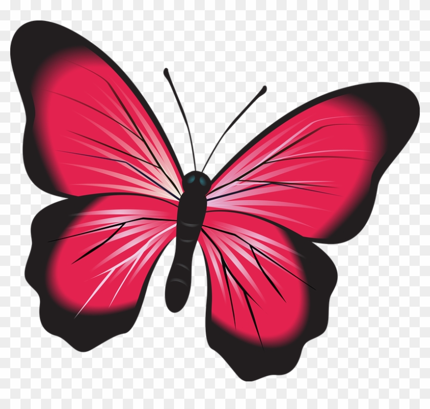Butterfly Pink Clip Art Insect Nature Natural Bug - Fluturi Imagini #1617