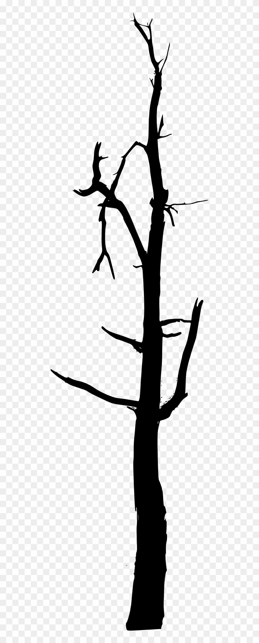 Bare Tree Silhouette Images - Bare Tree Silhouette Images #168