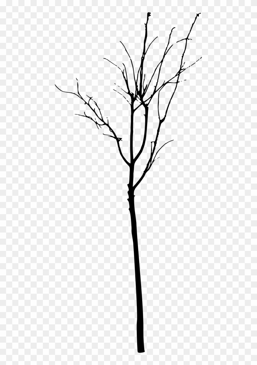 Free Png Simple Bare Tree Silhouette Png Images Transparent - Free Png Simple Bare Tree Silhouette Png Images Transparent #1635