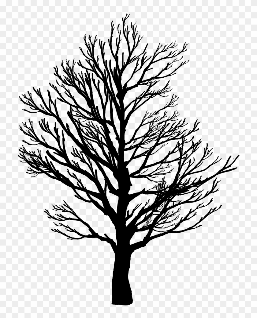 Barren Tree Silhouette - Barren Tree Silhouette #169