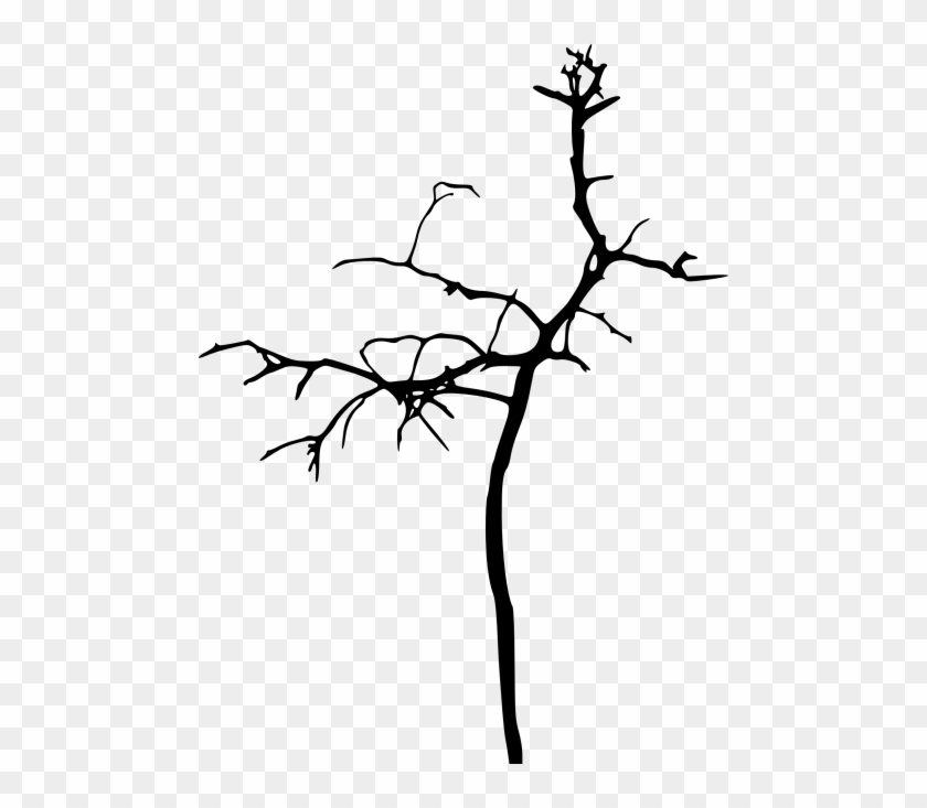 Free Png Simple Bare Tree Silhouette Png Images Transparent - Tree #1837