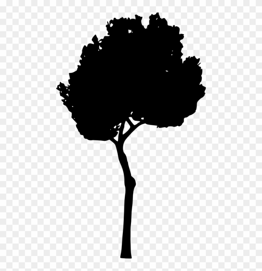 Free Png Tree Silhouette Png Images Transparent - Free Png Tree Silhouette Png Images Transparent #189