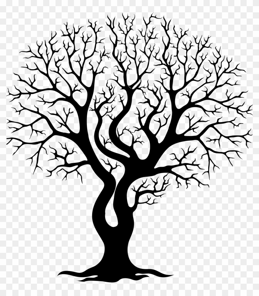 Image Gallery For Tree Branches Png - Image Gallery For Tree Branches Png #199